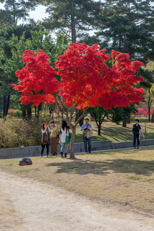 #8_OW_0218_Red Tree